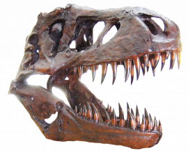 pngfind.com dinosaur skull png 6170867